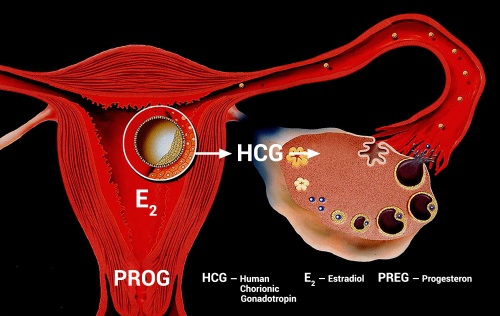Different embryo-maternal dialog in the first trimester of egg donation pregnancy